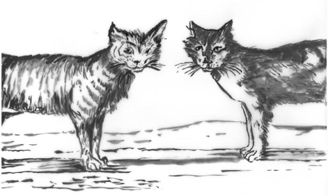 2-cats-talking-for-sitefinity.tmb-img-912